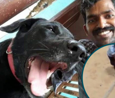Justice For Bruno: Dog Brutally Beaten to Death by 3 Youths in Kerala, India.